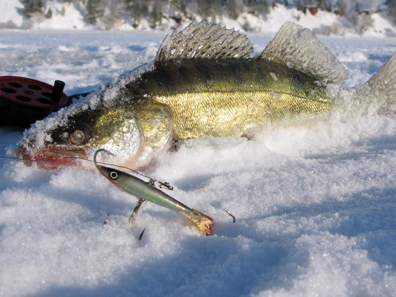 Ловля судака на балансир на Рыбинском водохранилище