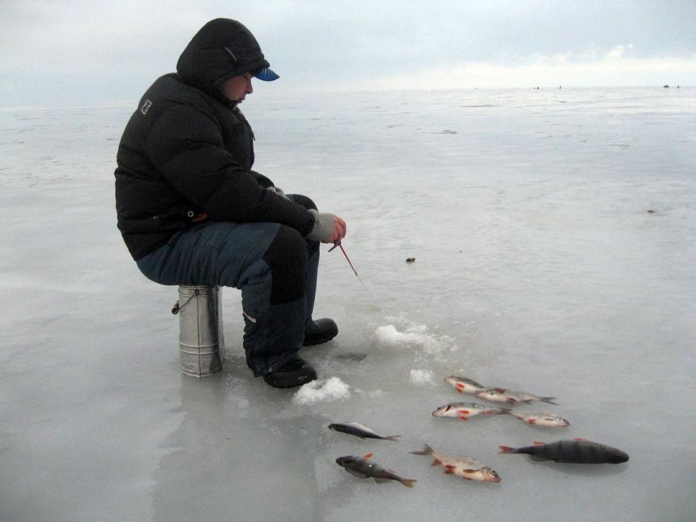 Плотва в декабре. Рыбинское водохранилище.