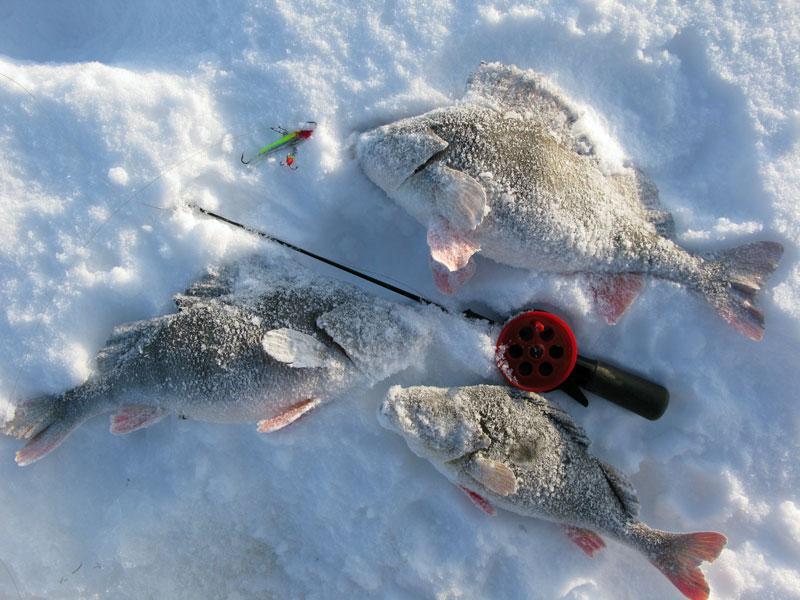 Ловля окуня на балансир на Рыбинском водохранилище