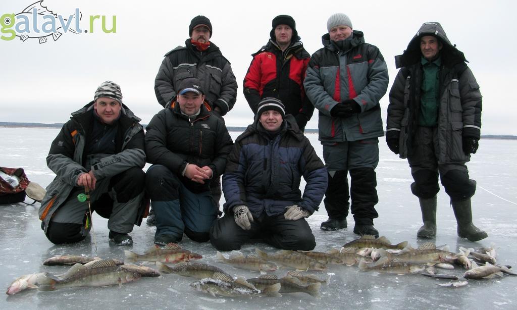 Судак на ратлин со льда. Синец в январе. Рыбинское водохранилище.
