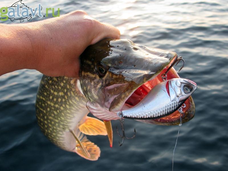Рыбалку на щуку