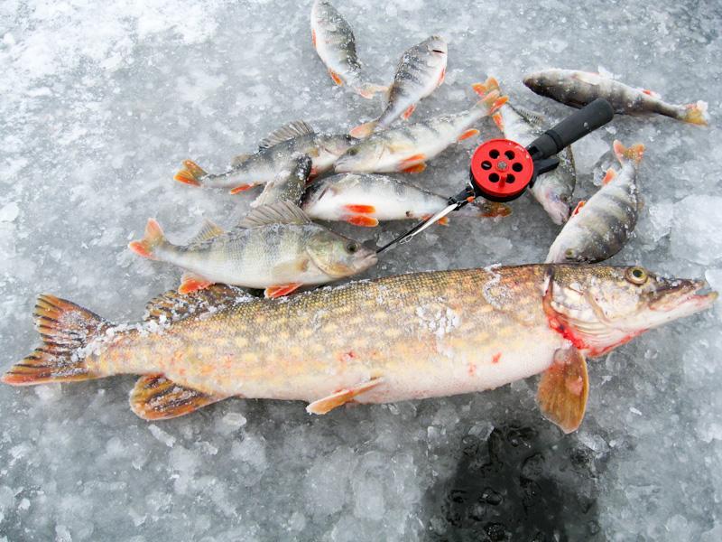 Ловля щуки и окуня по первому льду в декабре: Рыбинское водохранилище.