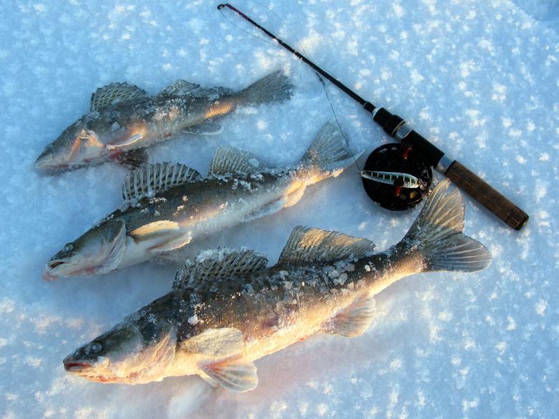 рыбалка в январе судак