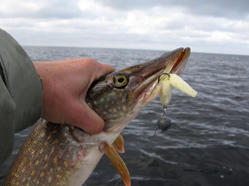 поролонка рыбалка
