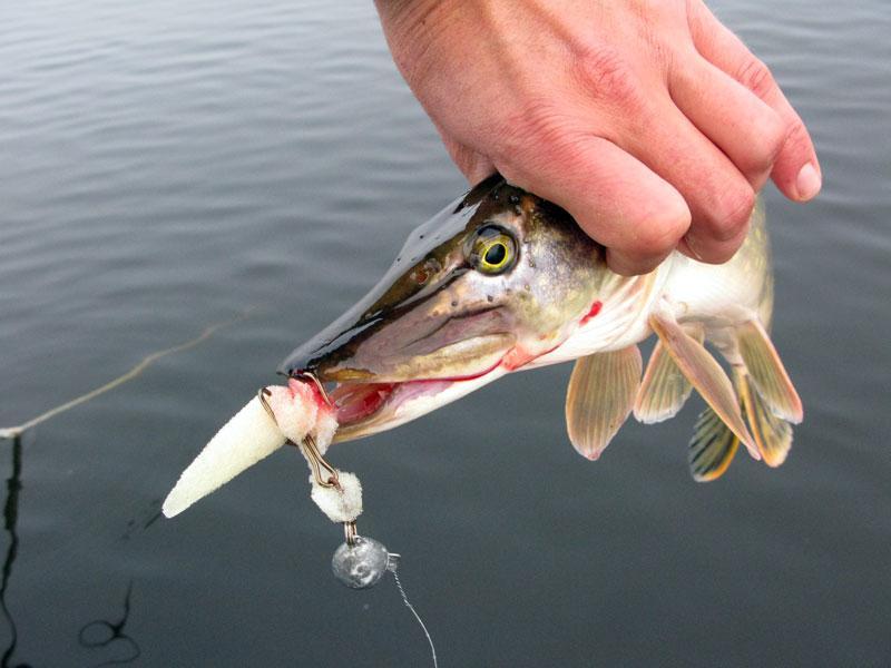 Рыбалка осенью в Ярославской области на реке Ухра